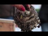 Что будет если погладить сову :))